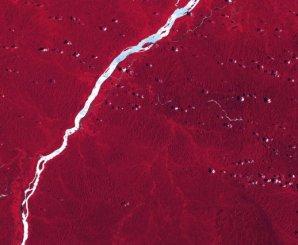 Le Bas-Maroni. Cette image SPOT du fleuve Maroni met en valeur le spectre infra-rouge émis par la forêt